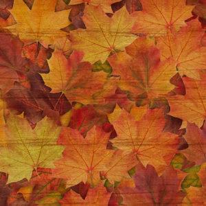 Ткань кленовые листья